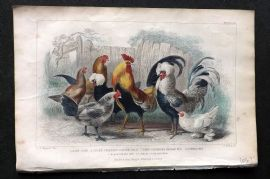 Goldsmith 1866 Hand Col Poultry Print. Game Cock, Spangled Polish, Dorking Hen.